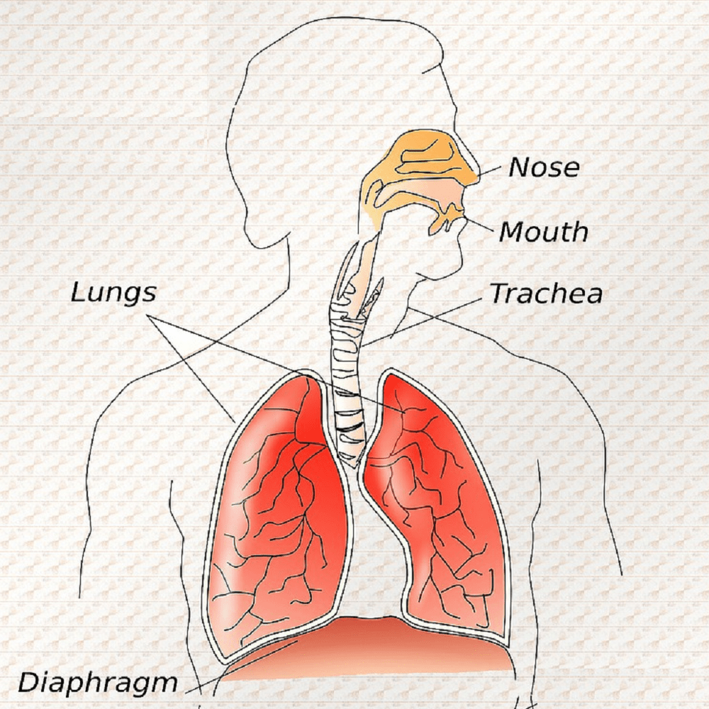The Diaphragm..Breathing life back into your body!