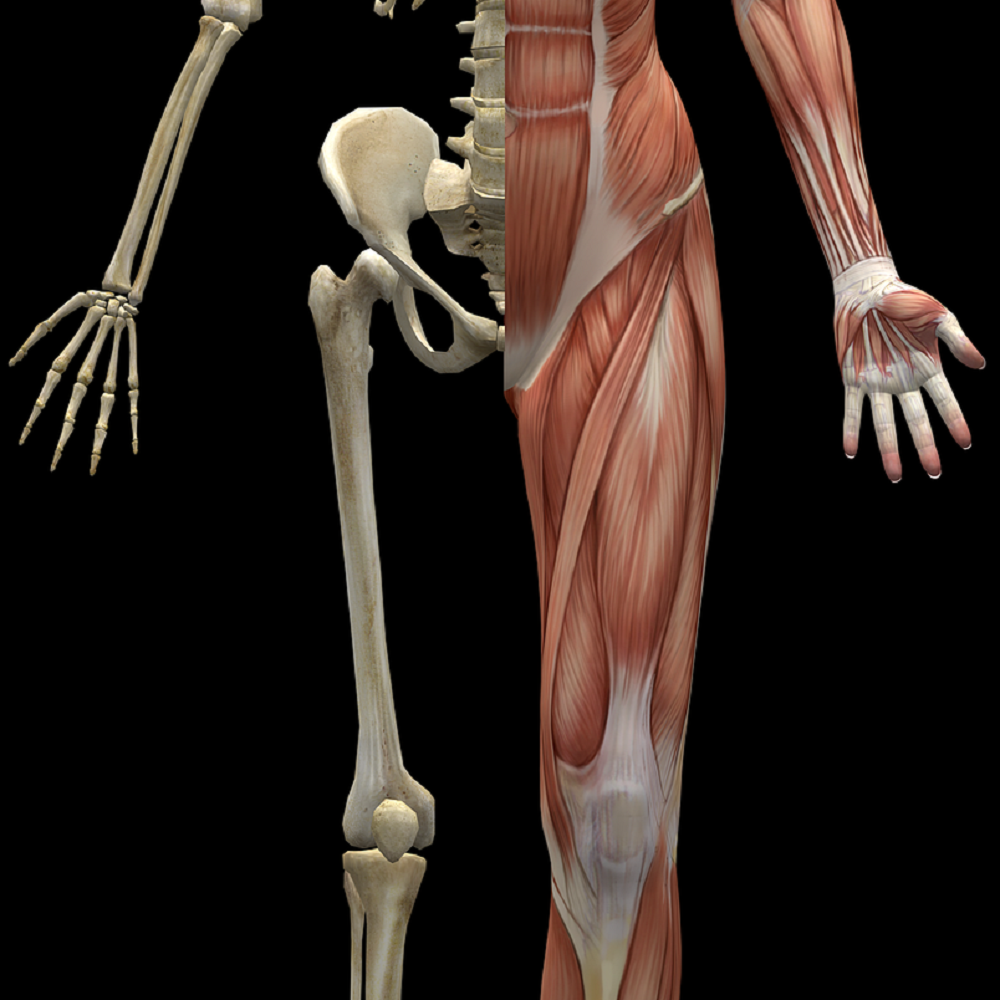 """WTF, or, """"What's The Fascia?"""""""