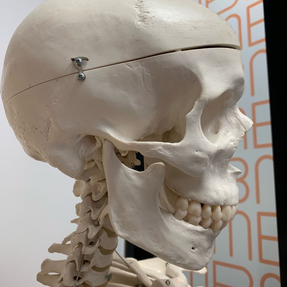 The Temporomandibular Joint (TMJ)